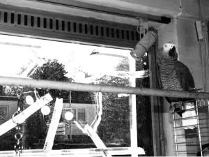 Schaufensterscheibe